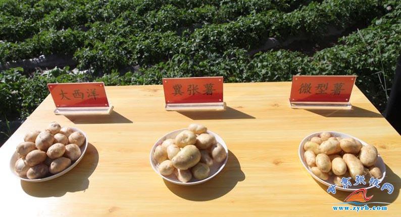 民乐县马铃薯产业发展40年纪实
