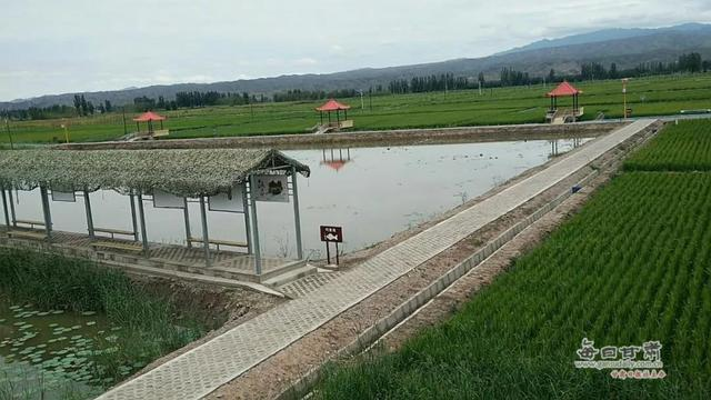 景泰:盐碱地里鱼虾肥 枸杞产业助脱贫