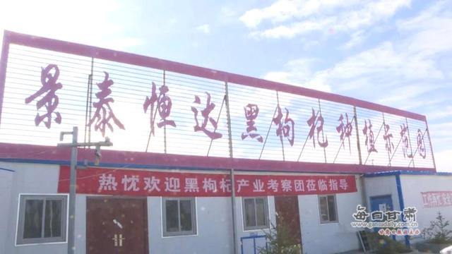 景泰喜泉镇中心村:两大特色产业助农增收稳脱贫