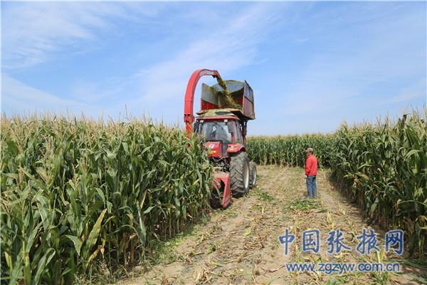 肃南:藏乡金秋储草忙