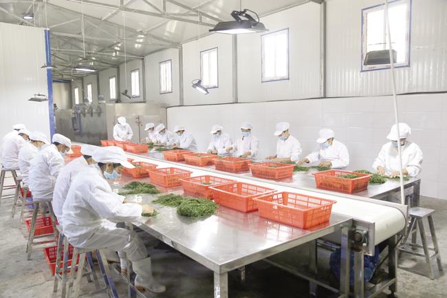 武都区高家村大力发展订单农业