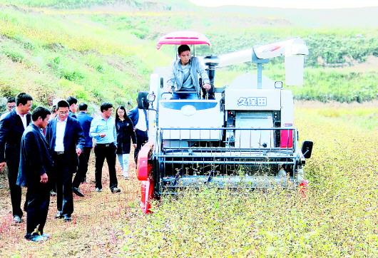 庆丰收:会宁县首次采用收割机收获荞麦