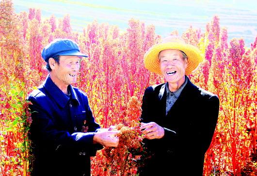 会宁县藜麦种植获得成功