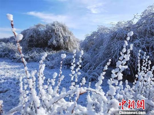 肃南迎来降雪,银装素裹化身白色世界。 郎文瑞 摄
