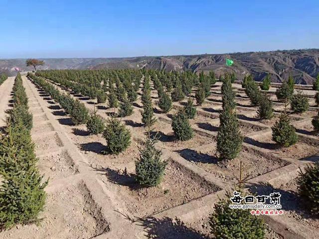 """近年来,宁县把绿化造林作为生态建设的攻坚目标来抓,以""""再造一个子午岭""""工程为目标,进一步突出壮大发展苗林产业培育规模,推动苗林产业向高质量、集约化发展。仅去秋今春,全县共完成苗林培育15.38万亩,占市上下达13万亩任务的118%,其中大苗栽植1.2万亩132万株,建成了中村孙安、太昌苟家、春荣昔家沟3个万亩和盘克宋庄、中村政平、太昌小盘河、春荣石鼓个5000亩示范点。同时,各乡镇也积极行动,完成苗林培育9万亩。"""