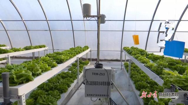 「改革开放40周年」靖远县:产业富民助推乡村振兴