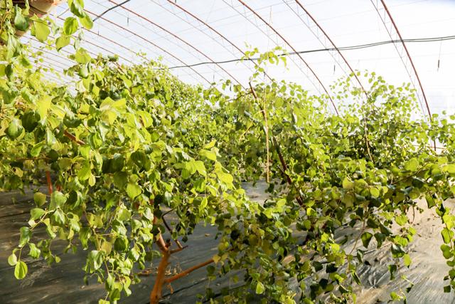 壁纸 成片种植 风景 花 植物 种植基地 桌面 640_427