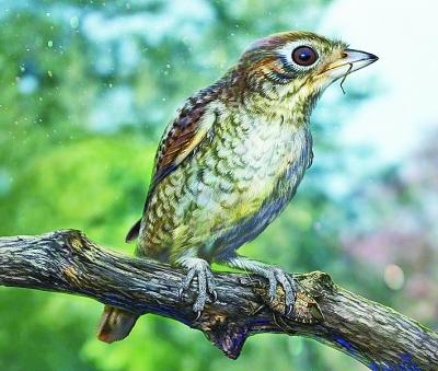 古生物学家发现1亿年前森林里的餐余
