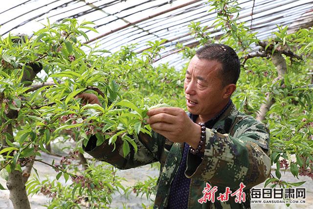 图为大棚莳植户正在对桃子举行疏花。 朱元军摄.JPG
