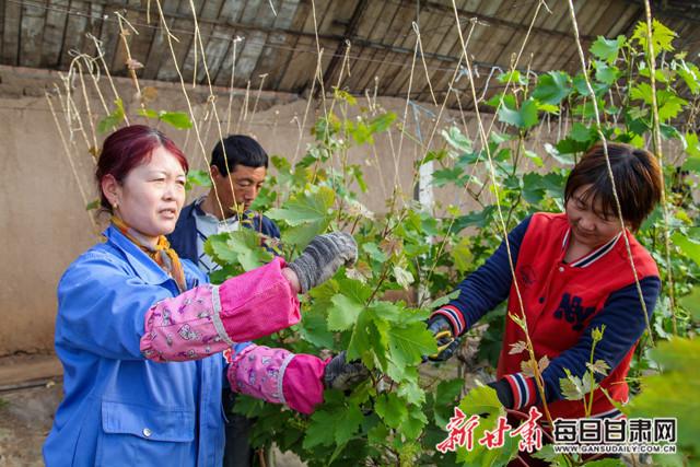 临泽7家葡萄专业合作