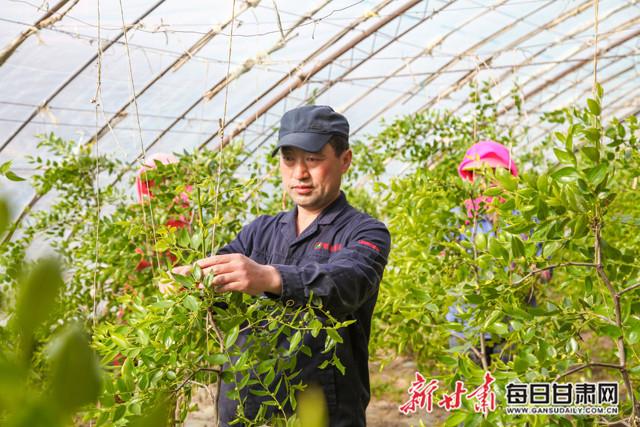 临泽7家葡萄专业合作社带动6000多农户增收