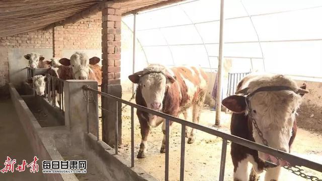 会宁:脱贫攻坚党旗红 小康路上争先锋