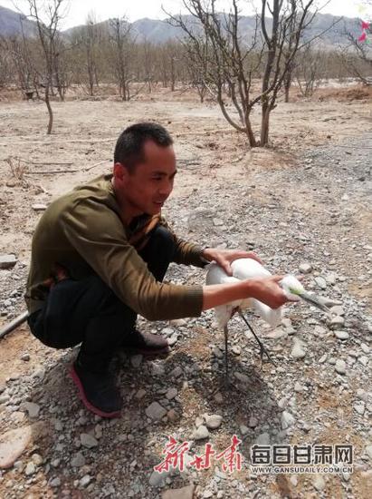靖远:警民联手救助一只国家二级保护动物白鹭