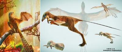 """我古生物学家发现""""长臂浑元龙"""""""
