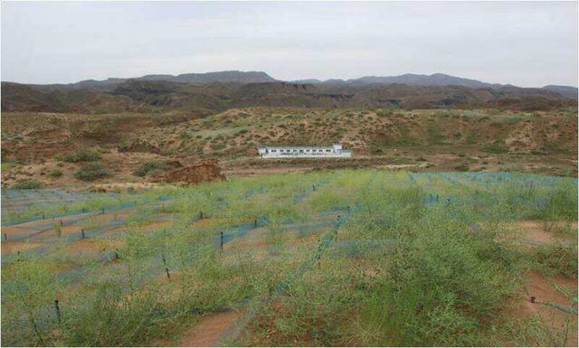 景泰县探索应用新材料新技术促进沙化地植被修复效果显著