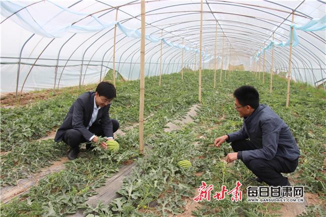 蔬菜搭配查看西瓜长势.jpg