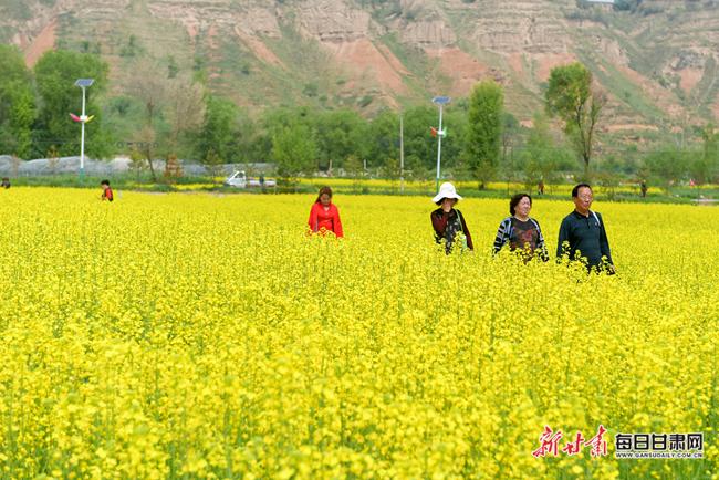 """临夏市调整产业结构发展农旅经济 农民感叹:""""玉米改油菜,还真改对嘞"""""""