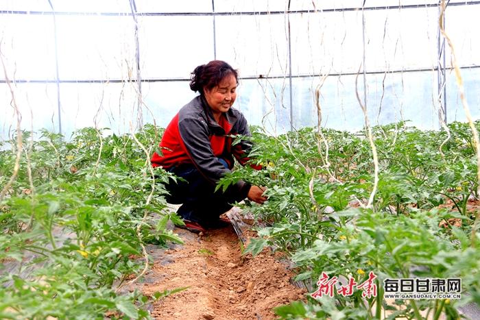 李庄村村民在大棚中给西红柿绑吊绳.JPG
