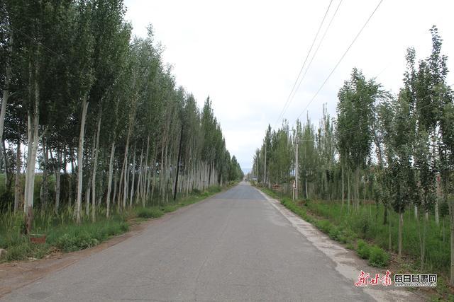 白银市靖远县东升镇新联村的枸杞又红了,村子更火了