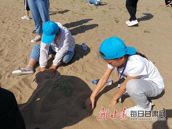 沙漠中捕食的蜥蜴和沙鼠等小动物 也加入到游戏的行列.
