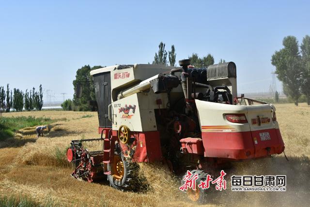 图为,机械收割小麦副本.jpg