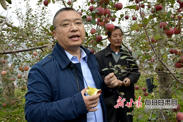 1斤3元销量3万斤 58岁果农当主播把礼县苹果卖成网红
