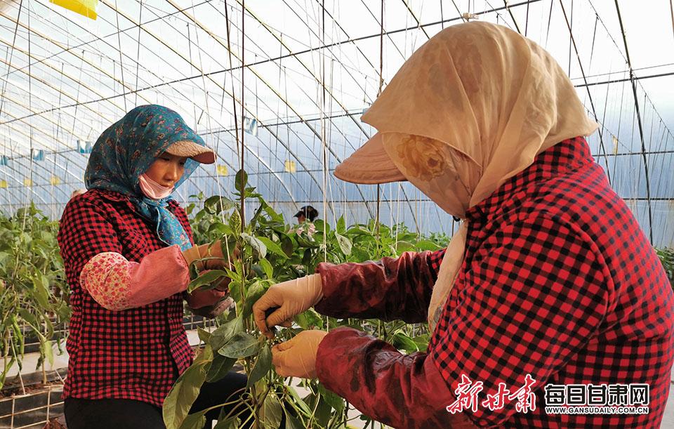 崆峒区发展设施蔬菜 力�!安死�