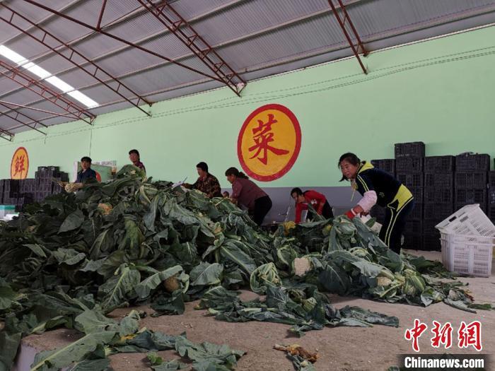 甘肃漳县农户做工人提身价:不再仅守薄田维持生计