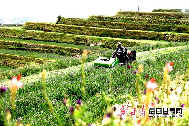 安定区青岚山万亩商品草示范基地上机械收获作业1 .JPG