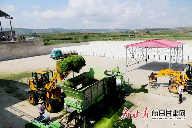 位于安定区香泉镇的定西巨盆草牧业公司加工现场曹应森摄.JPG