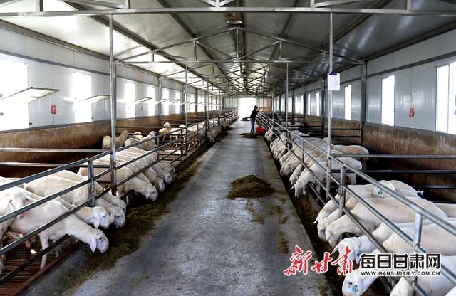 甘肃中盛二期国家级核心种羊场标准化羊舍.jpg