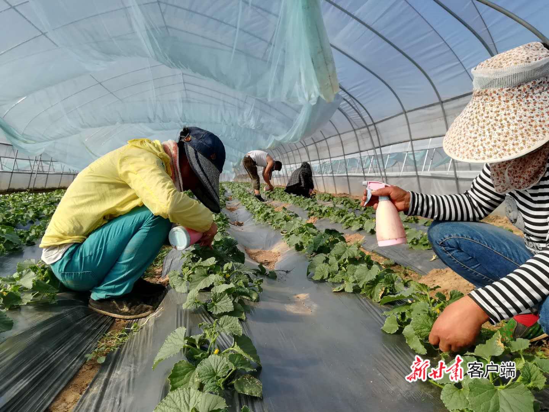 甘肃省聚焦产业扶贫突出问题展开