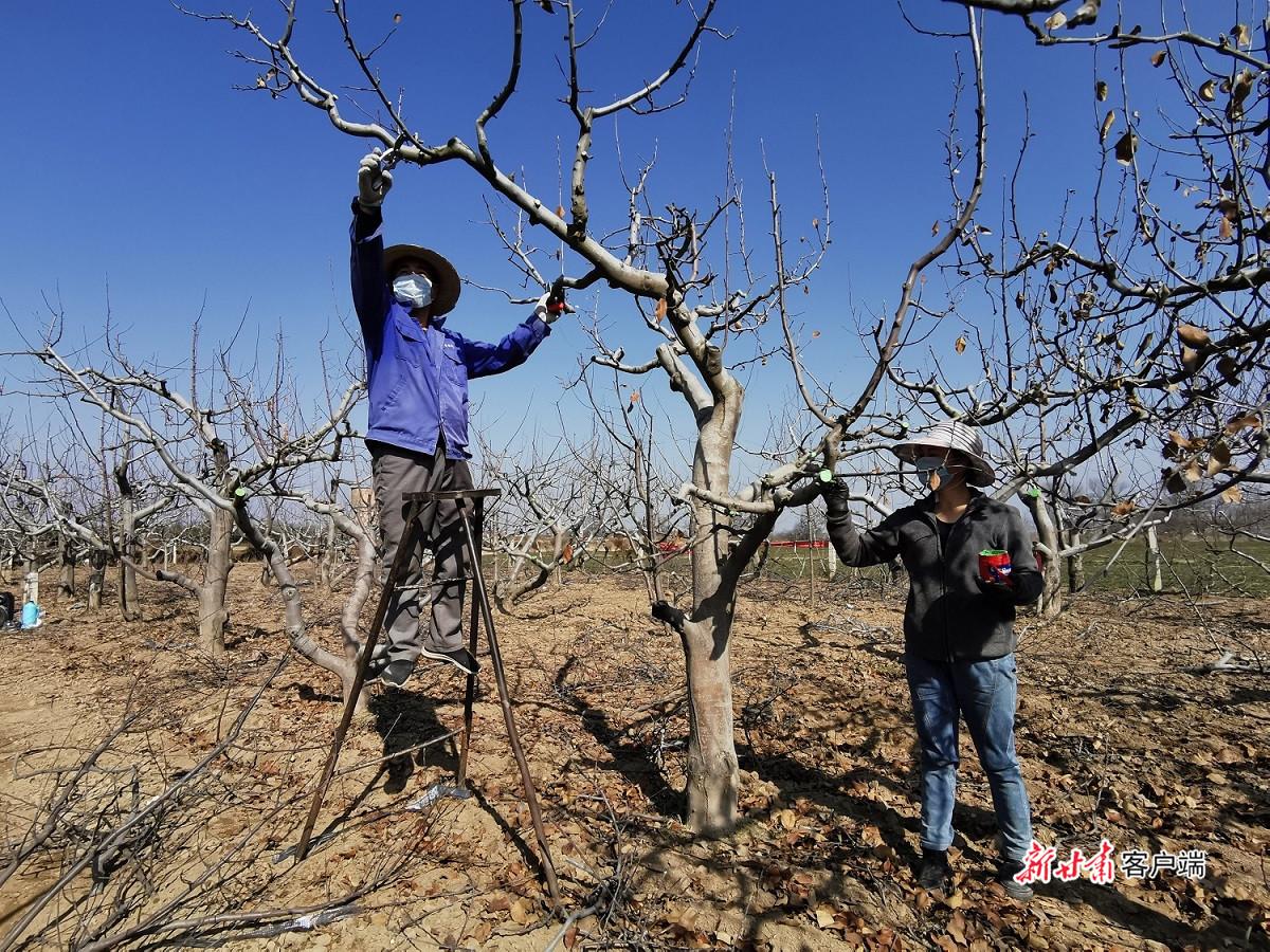 甘肃省推进种植业绿色高质量发展