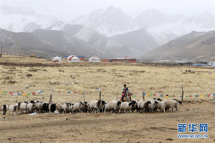 """(脱贫攻坚)(1)从贫困户到致富能人――藏族村民宋天柱""""变身""""记"""