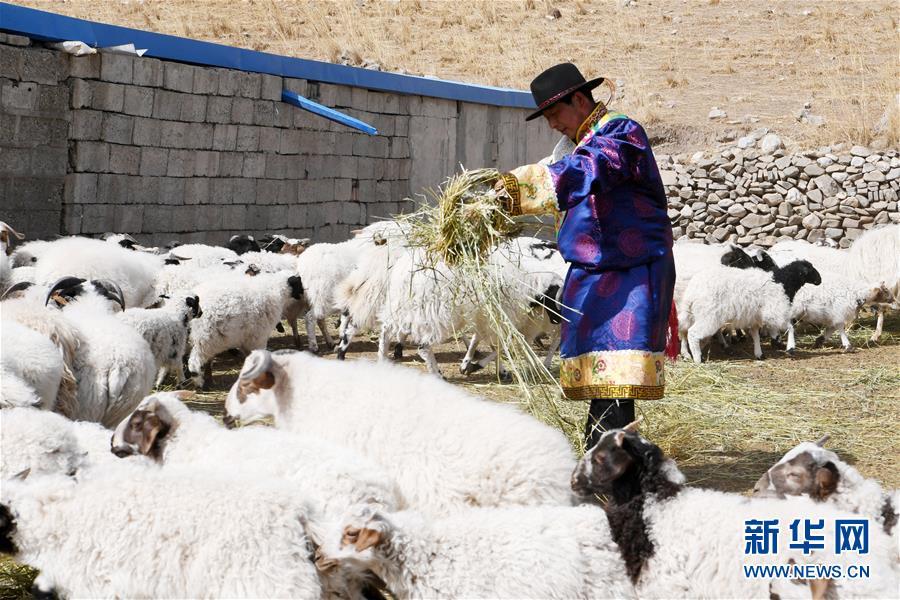 """(脱贫攻坚)(2)从贫困户到致富能人――藏族村民宋天柱""""变身""""记"""