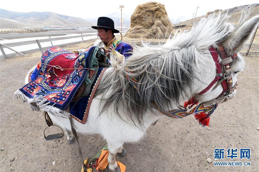 """(脱贫攻坚)(8)从贫困户到致富能人――藏族村民宋天柱""""变身""""记"""