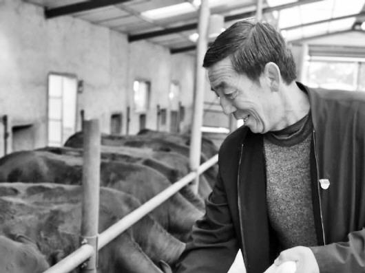 """灵台:脱贫致富的""""牛""""产业"""