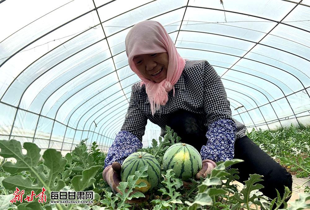 图3:敦煌市联谊农产品农民专业合作社社员秦秀芬展示她种植的无公害西瓜.jpg