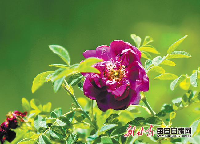 http://www.lzhmzz.com/kejizhishi/111217.html