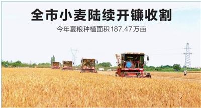 庆阳市小麦陆续开镰收割 今年夏粮种植面积187.47万亩