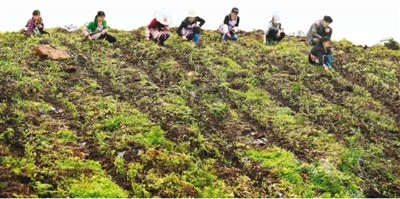 安吉人口_湖州:安吉劳务协作托起6000名贫困人口幸福梦