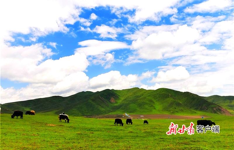"""""""卓玛""""话脱贫 ――甘南藏区妇"""