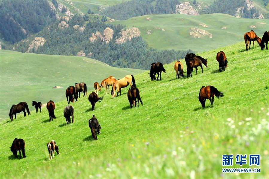 #(环境)(4)甘肃张掖:马场花开