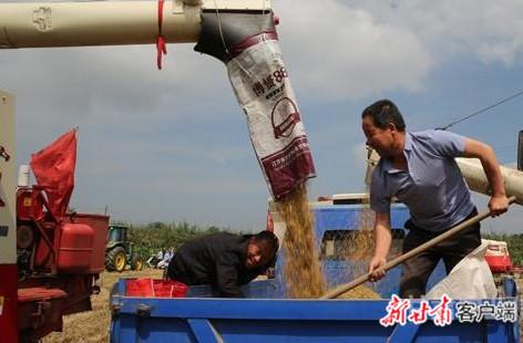 甘肃省夏粮喜获丰收!预计夏粮总产327万吨