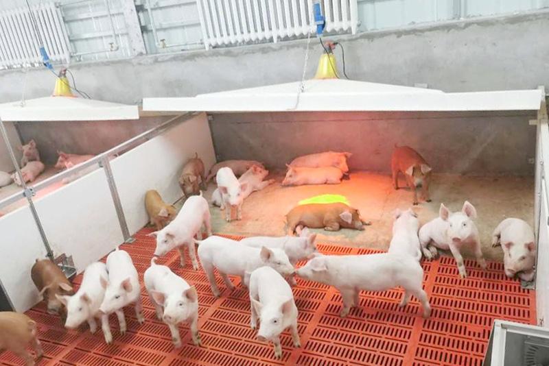 金昌最大生猪养殖项目有序推进