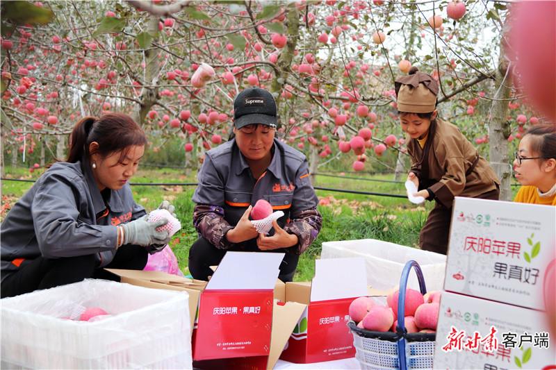 西峰区三姓林果专业合作社工人分拣包装苹果.jpg