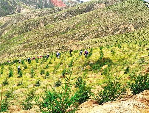 【经济日报】甘肃临夏东乡县:荒山荒坡正变绿