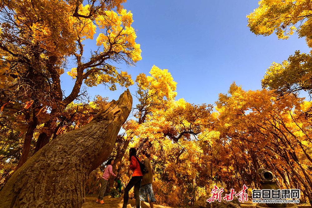 10月11日,游人在敦煌莫高镇胡杨林观赏浓浓的秋色。(9).jpg