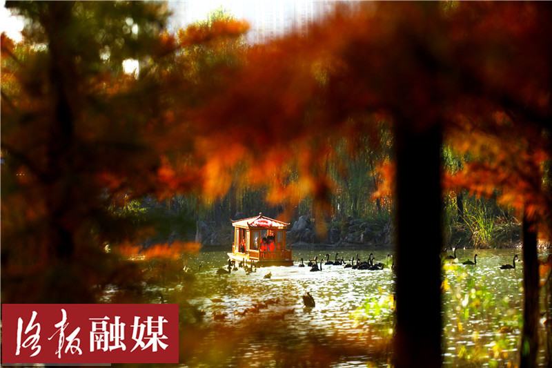"""美!洛阳这个新""""网红打卡地""""每天上演""""天鹅湖"""""""