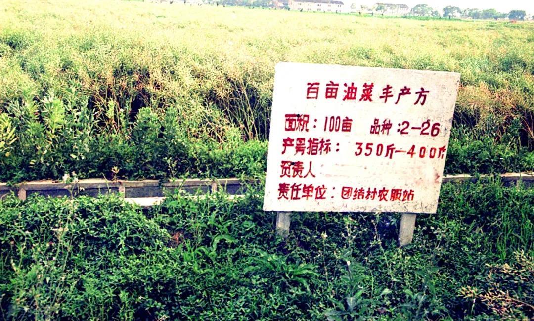 首期启动区原貌(团结村油菜方)沈文进摄于1993年